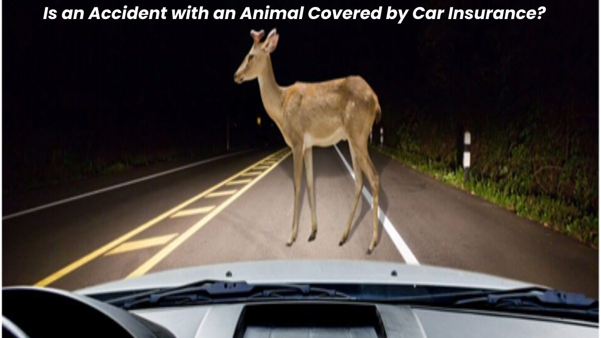 Is an Accident with an Animal Covered by Car Insurance?